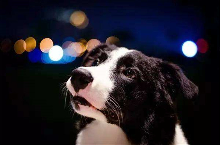 宠物寄养有危险吗?-合肥宠物网