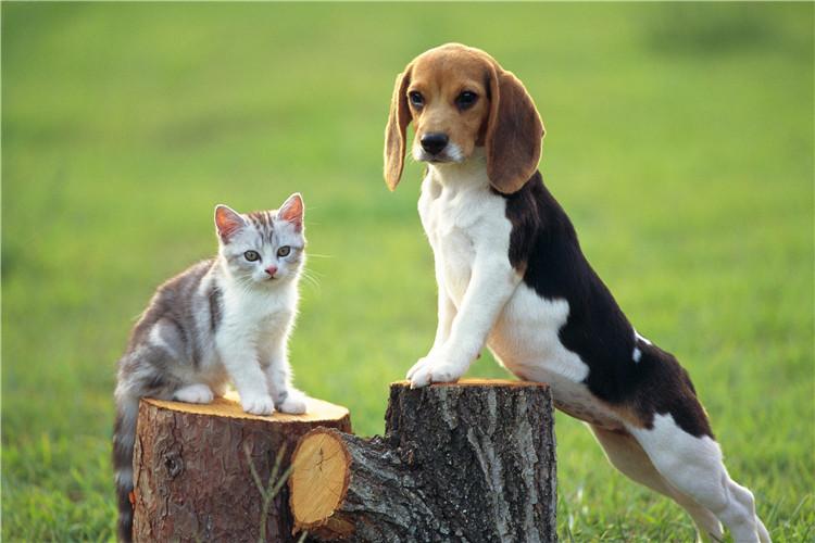 合肥市包河区寄养宠物的地方-合肥宠物网