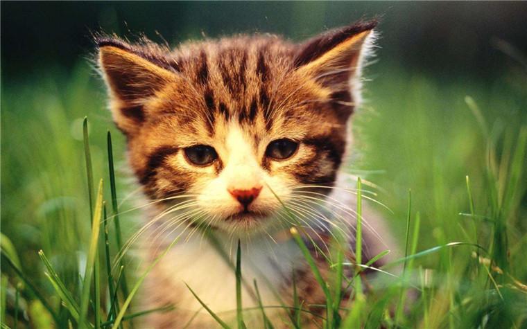 合肥买猫去哪里买好?