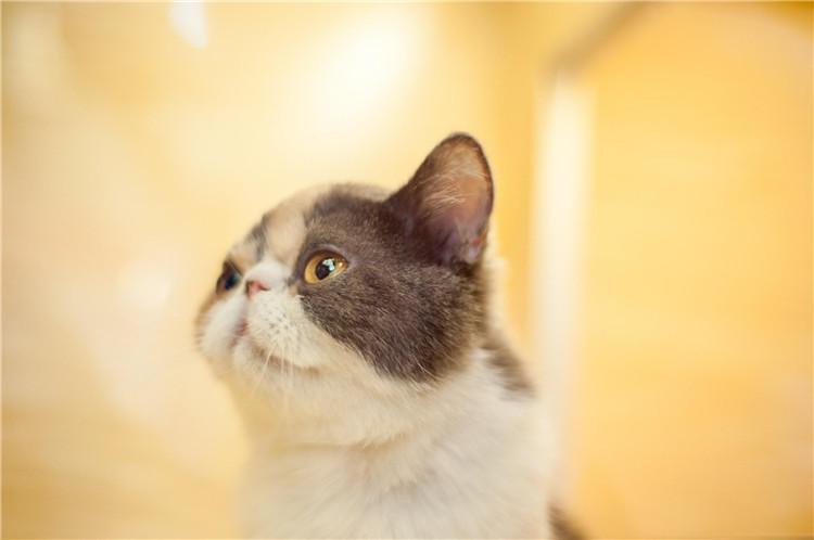 合肥宠物店给猫驱虫哪家好?