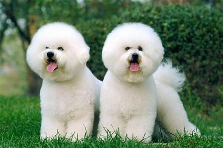 合肥买狗去哪里比较好?