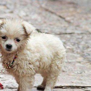 宠物免费领养-合肥宠物网