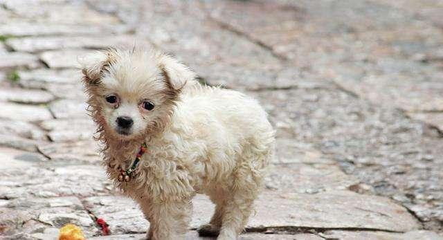 合肥领养狗狗的地方-合肥宠物网