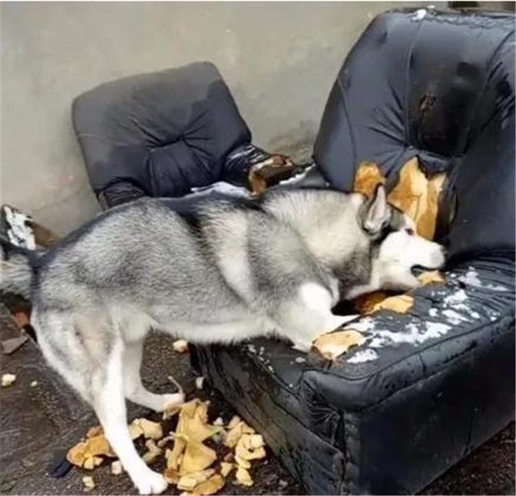 狗界三傻四疯你了解吗?-合肥宠物网