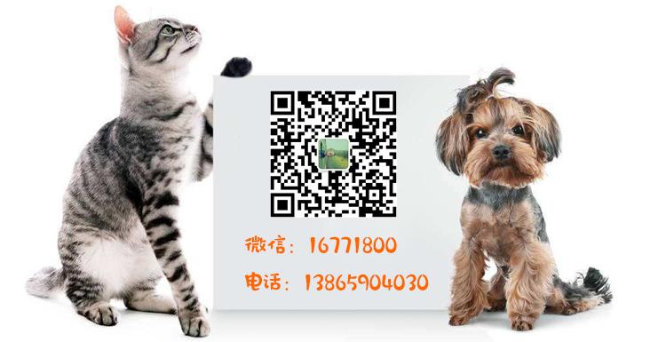 合肥宠物群-合肥宠物网