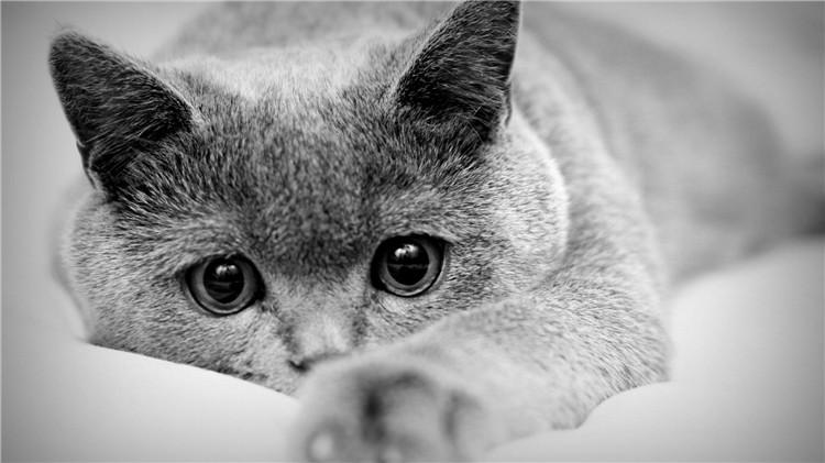 合肥高端宠物寄养单间-合肥宠物网