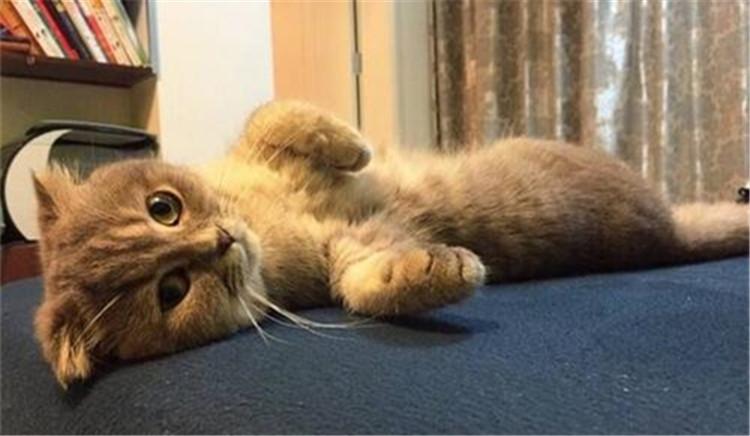 猫咪寄养会想主人吗?-合肥宠物网