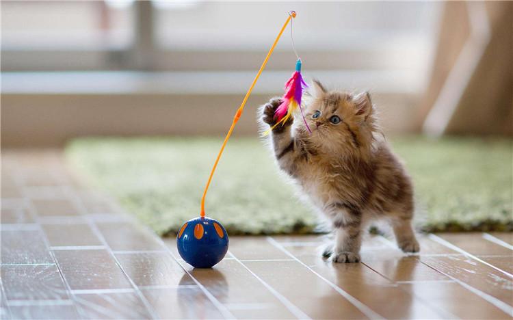 猫寄养必须疫苗齐全吗?