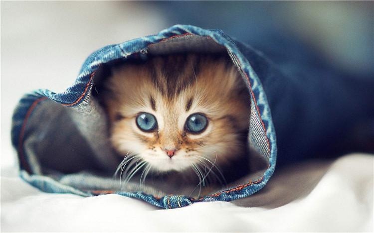 合肥流浪动物收容中心可以领养宠物吗?