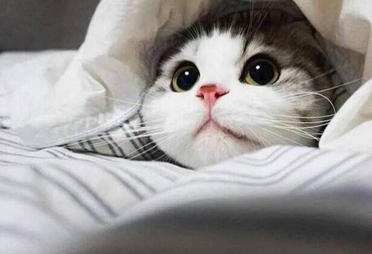 合肥哪里可以领养流浪猫?