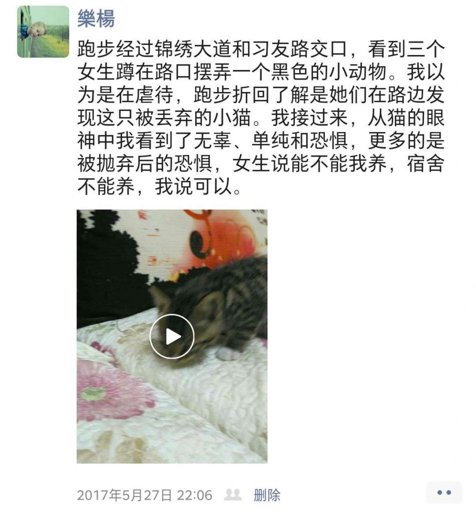 樂楊在合肥救助的第一只宠物