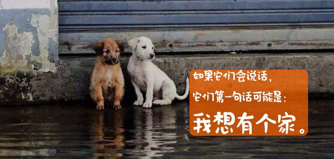 合肥宠物免费领养中心